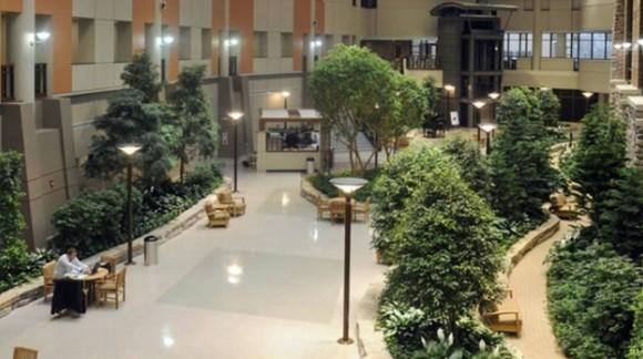 Il Verde Ti Cura: Curare e Coltivare Piante e Giardini Fa Stare Bene