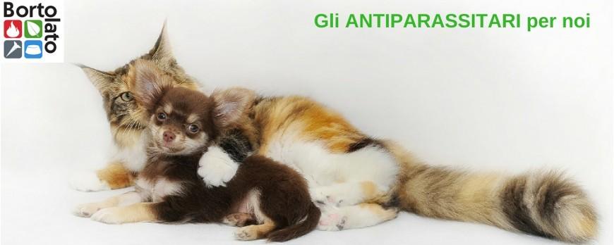 Guida agli antiparassitari per cani e gatti