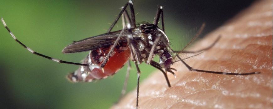 Zanzare, che fare?